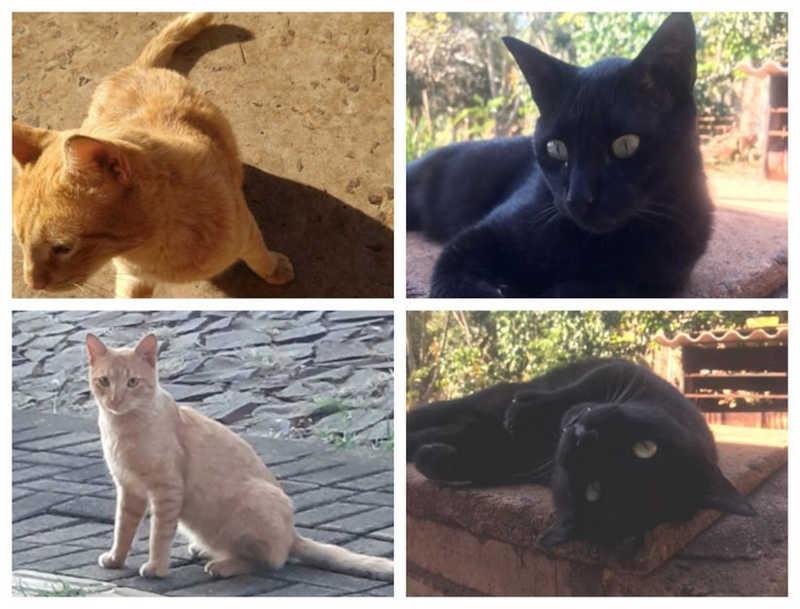 Alguns integrantes da comunidade felina, já mortos. Fotos Larissa Mardurkiewicz
