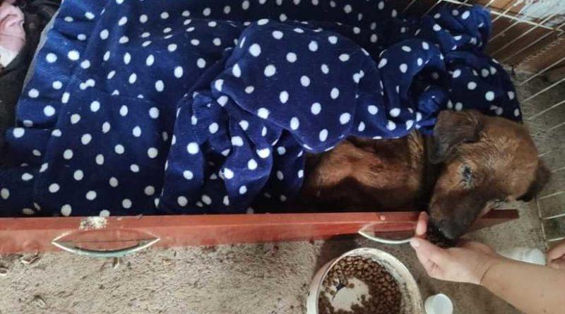 A cachorra estava em canil sujo e molhado, conforme as protetoras - Foto: CMPDA