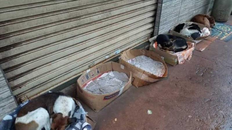 Mulher alimenta cachorros e gatos de rua e nos dias chuvosos e frios monta caminhas em caixas de papelão. (Foto: Paranavaí Urgente)