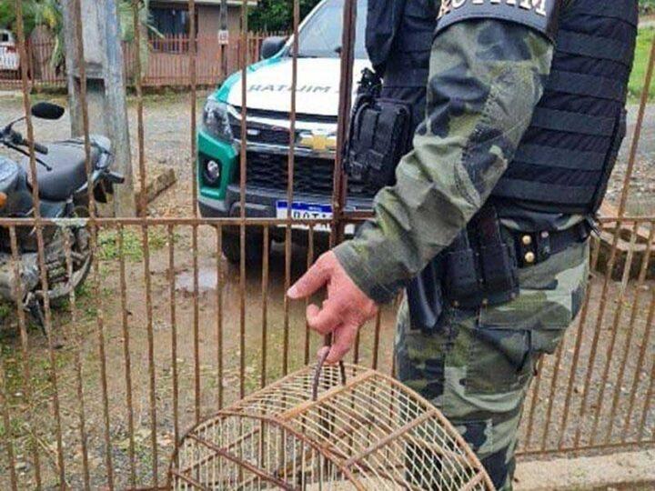 Foto: Divulgação Polícia Ambiental