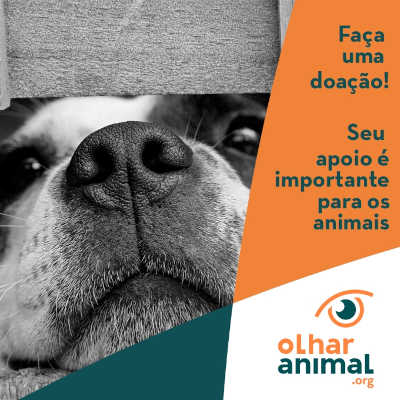 Ajude a ONG Olhar Animal