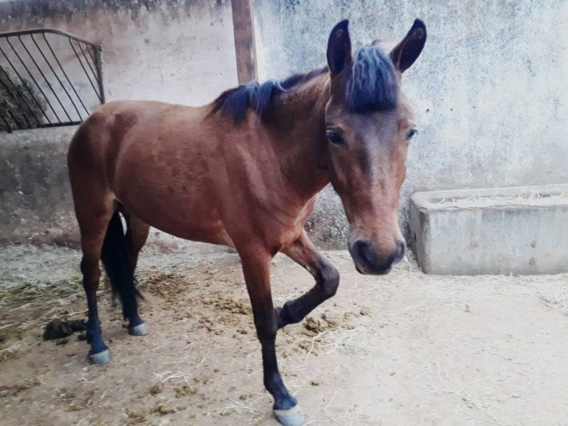Égua é resgatada em Campos, RJ, após vídeo com maus-tratos viralizar