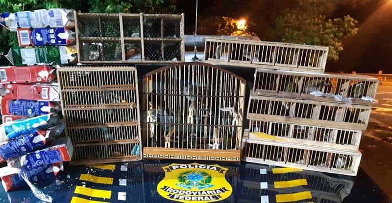 Alguns pássaros eram transportados em caixas de leite — Foto: Divulgação/PRF