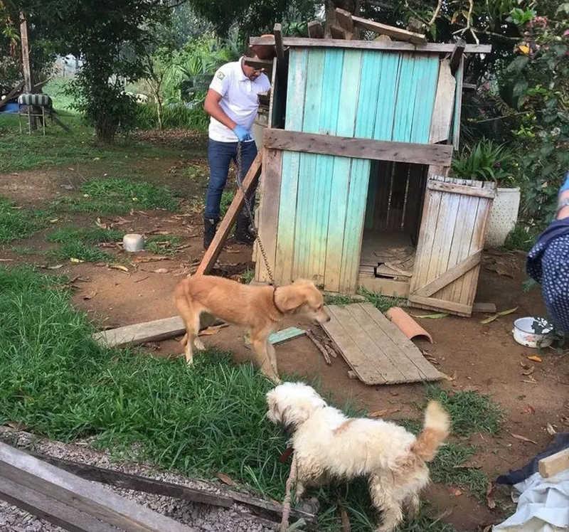 Operação resgata 30 cachorros e gatos em condições de maus-tratos em Buritis, RO