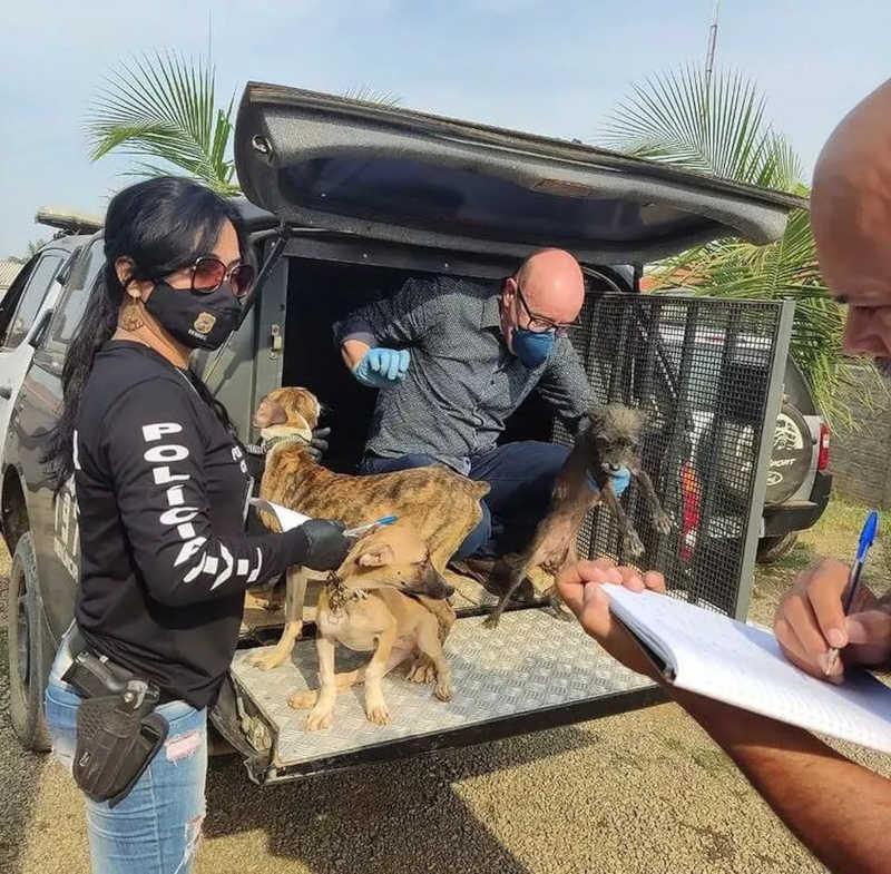 Operação resgata 30 animais em condições de maus tratos em Buritis, RO — Foto: Polícia Civil/Reprodução