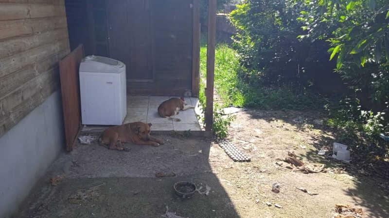 Cães viviam em situação precária, segundo a Guarda Municipal — Foto: Divulgação / Guarda Municipal