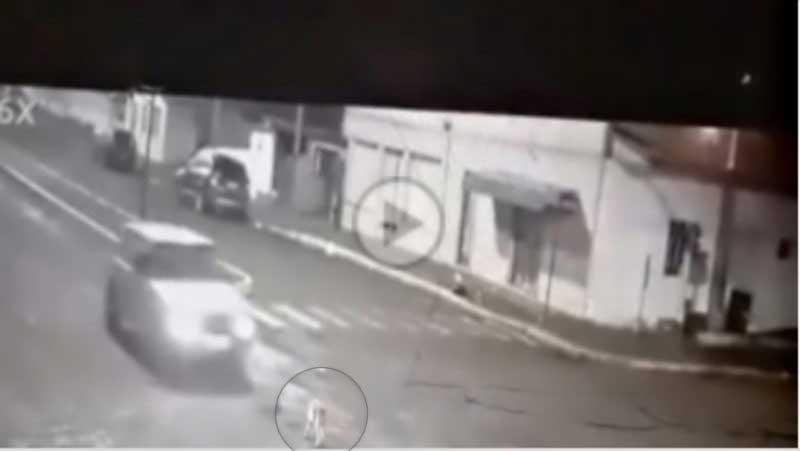 Polícia de SC investiga morte de cão vagando em rua
