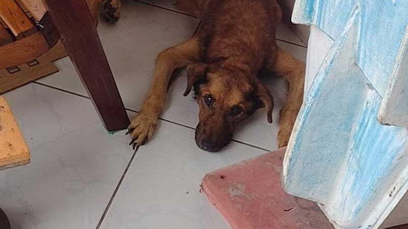 Cachorro encontrado em situação de extrema magreza em Joinville — Foto: Polícia Militar/Divulgação