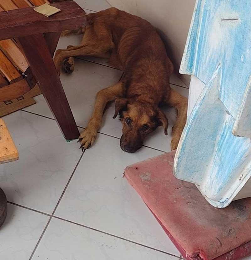 Cachorro em situação de maus-tratos morre antes de resgate e tutor é preso em flagrante em SC