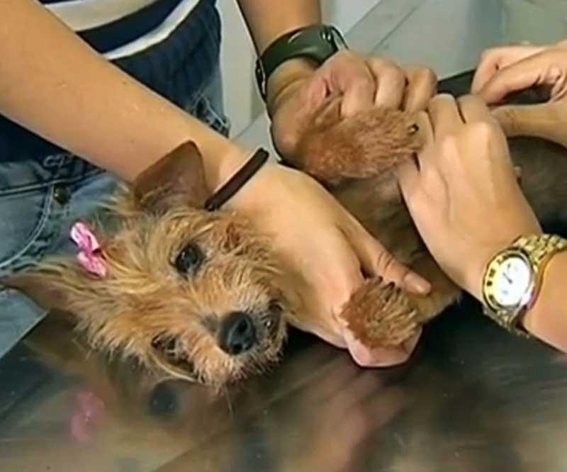Prefeitura de Bauru promove campanha de conscientização sobre o câncer de mama em cachorras e gatas