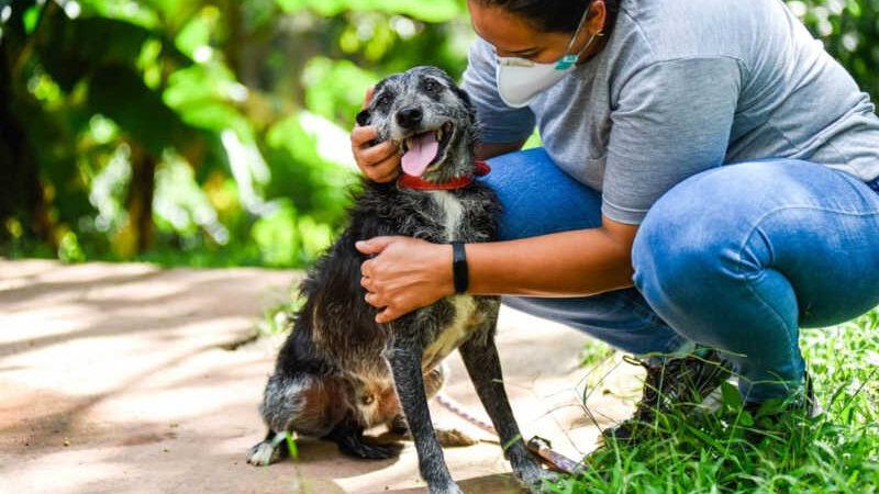Curso de capacitação para protetores de animais recebe inscrições em Jundiaí — Foto: Prefeitura de Jundiaí/Divulgação
