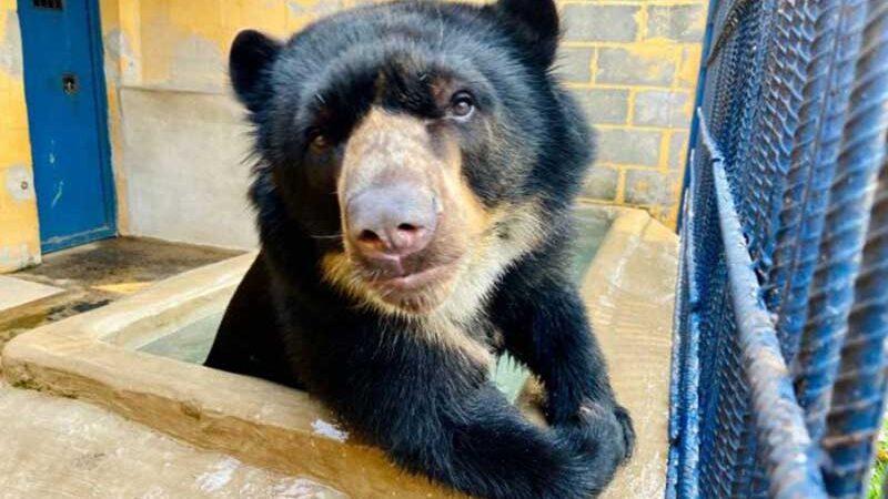 Urso irá para local adequado com conforto e paz (Maycon Barbon)