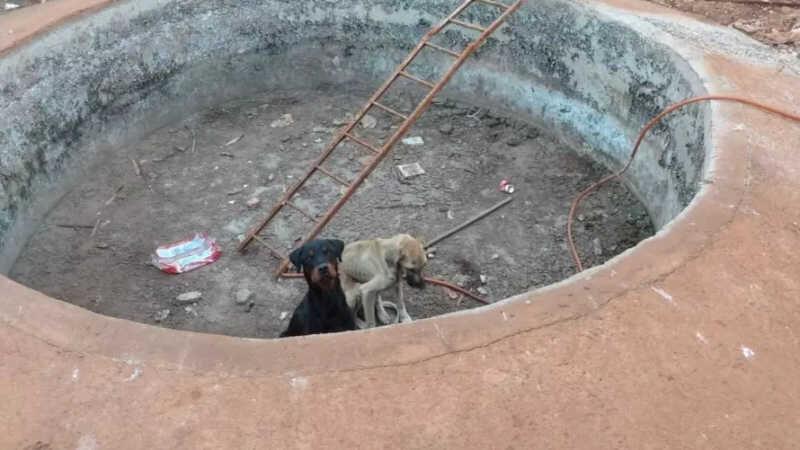 Em maio, cães foram resgatados dentro de um buraco em Ribeirão Preto (Imagem: Guarda Civil de Ribeirão Preto)