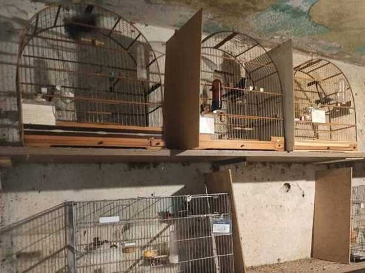Cativeiro ilegal em que 65 aves silvestres foram resgatadas na Zona Sul de São Paulo — Foto: Divulgação/SSP