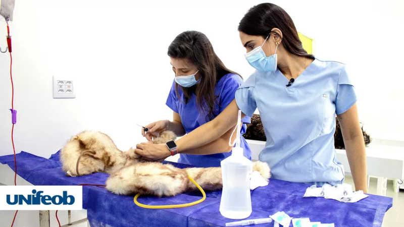 Manequins tecnológicos intensificam ensino da Medicina Veterinária no interior de SP