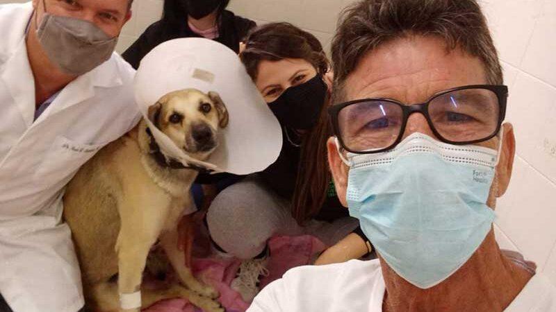 Em menos de 1 dia, campanha arrecada valor para cirurgia de cão 'mascote' de quiosque que foi atropelado — Foto: Arquivo pessoal