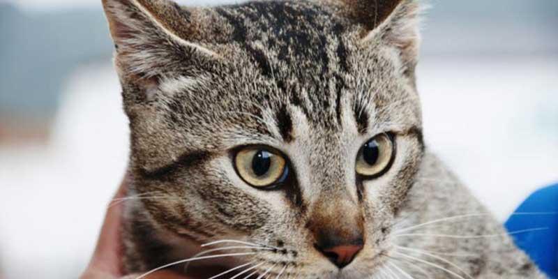 Bem-Estar Animal e Zoonoses (Divulgação/Prefeitura de Ubatuba)