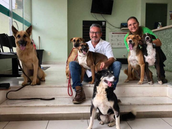 Cães que comeram salsichas com anzóis recebem alta cirúrgica em Valinhos (SP) — Foto: Christiano Yamasaki
